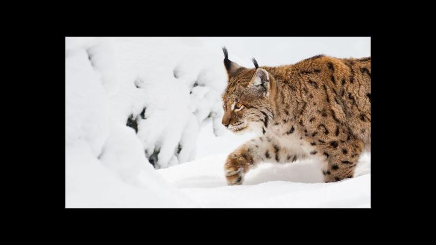 Video Úbytek zvířat na Zemi je alarmující