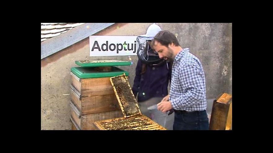 Video Adoptuj si včelu: Bratislava podporuje chov včel ve městě