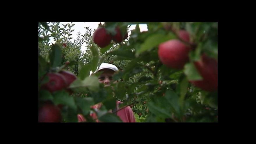Video Sadaři se bojí nízkých cen jablek.