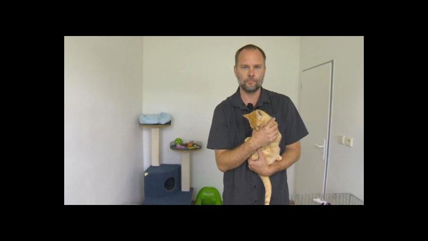 Video Kastrace koček v Klášterci nad Ohří