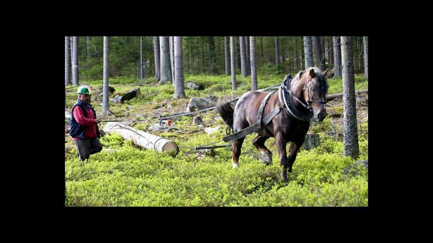 Video Koně se prý Šumavě nevyplácí, kočí s tím nesouhlasí