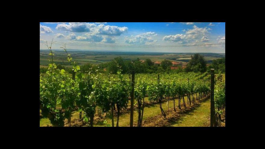 Video Nyitrai: Naše kampaň na víno byla efektivní