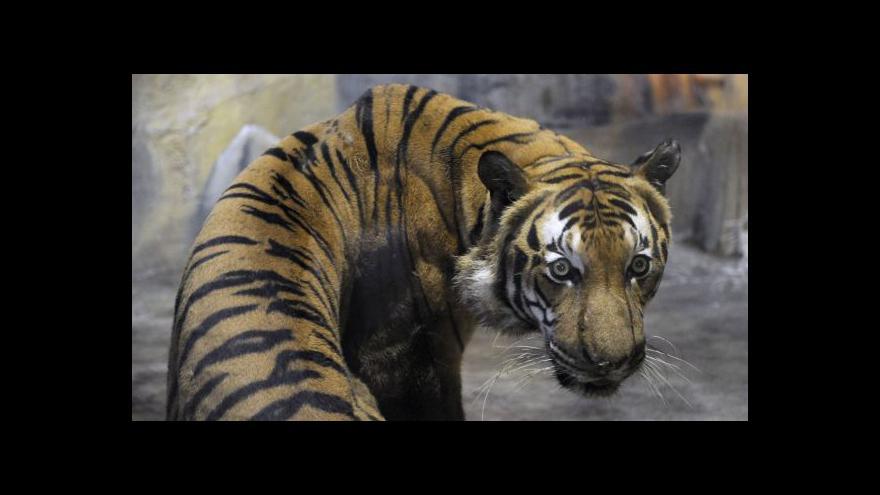 Video Strážci pralesa vymírají