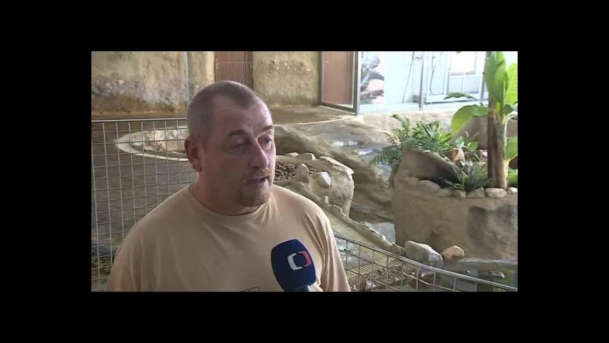 Video O chovu krokodýlů hovoří zootechnik Lubomír Roškot