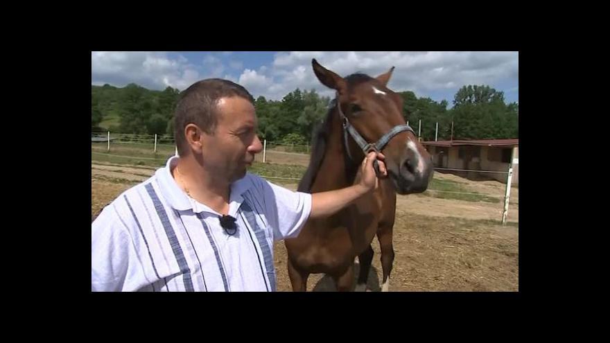 Video Chovatel Petr Galatík o moravském teplokrevníkovi