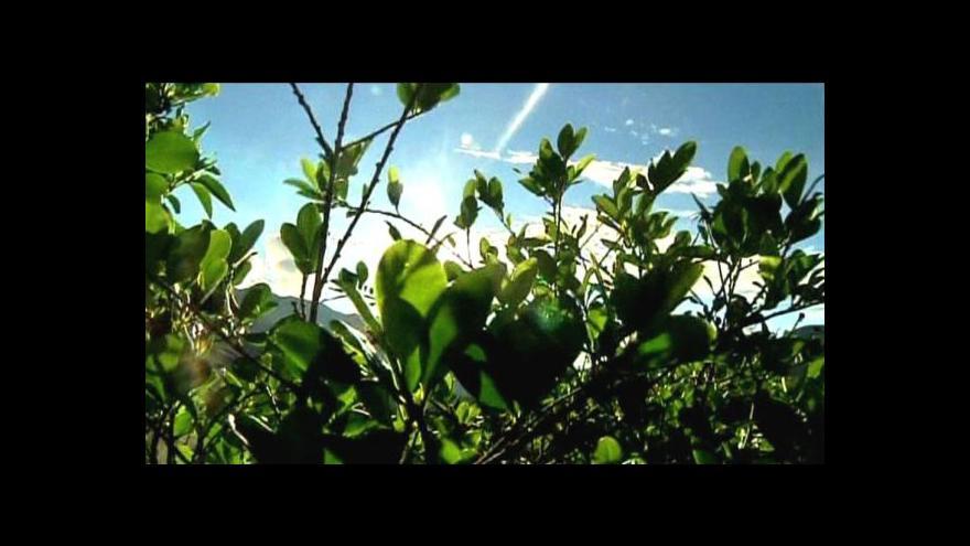 Video Produkce koky v Peru klesá