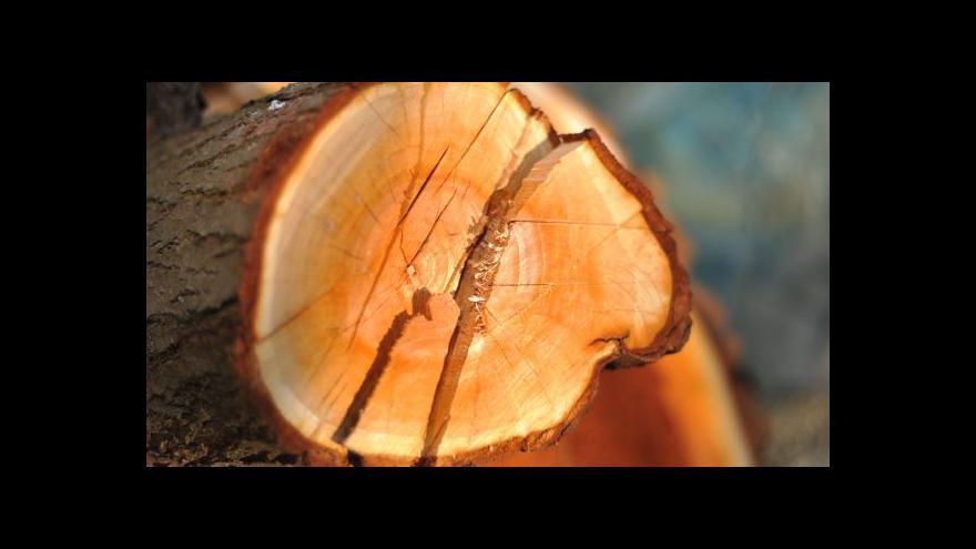 Video Ministerstvo chce chránit stromy před jejich vlastníky, zpřísní vyhlášku