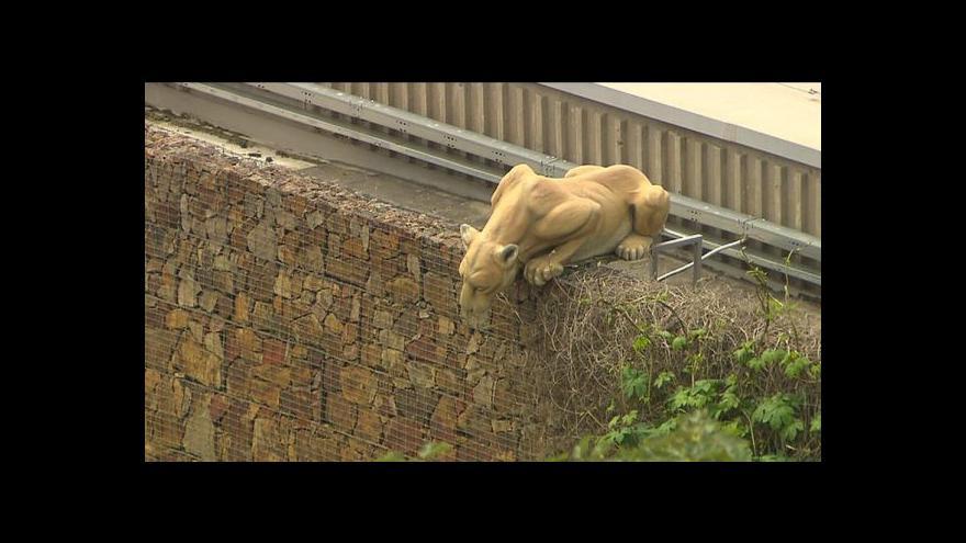 Video Záchrana zvířat v zoo