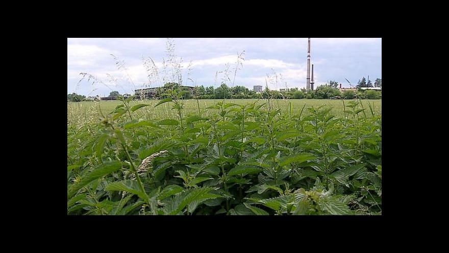 Video Místo firem kopřivy – drahá půda odrazuje investory