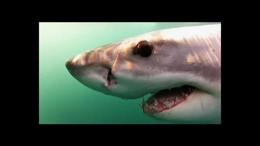 Video Na žraloky upozorní speciální bójky
