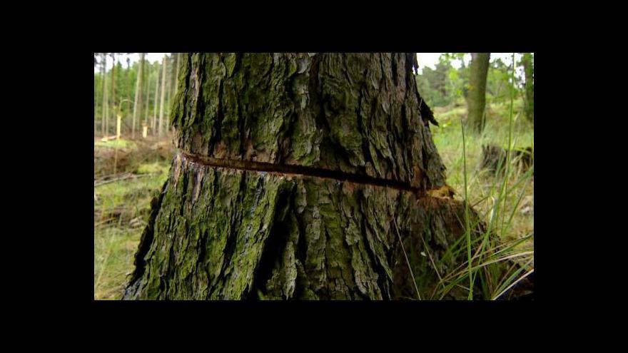 Video U Horních Vilémovic někdo nařezal na šest set stromů