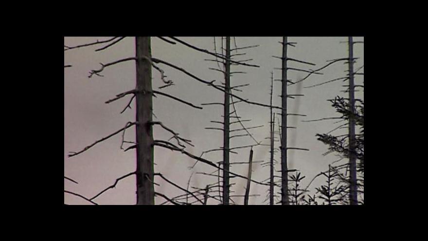 Video Obnově lesů v Krušných horách by mohly pomoct dotace