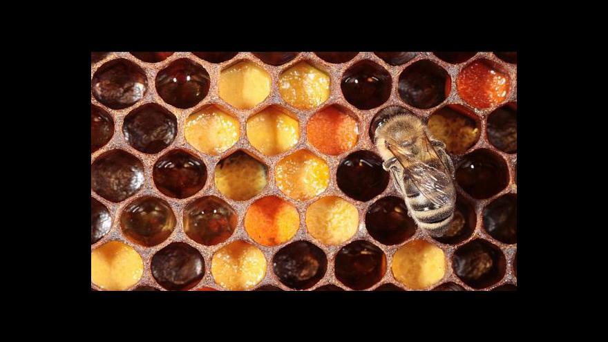 Video České včelařství zachraňují mladí chovatelé