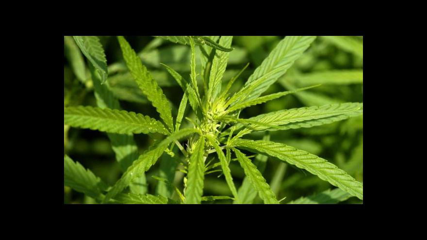 Video Uruguay zlegalizovala marihuanu