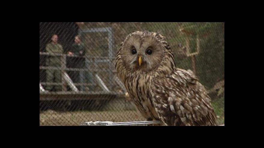 Video V šumavském parku je 20 vzácných druhů sov