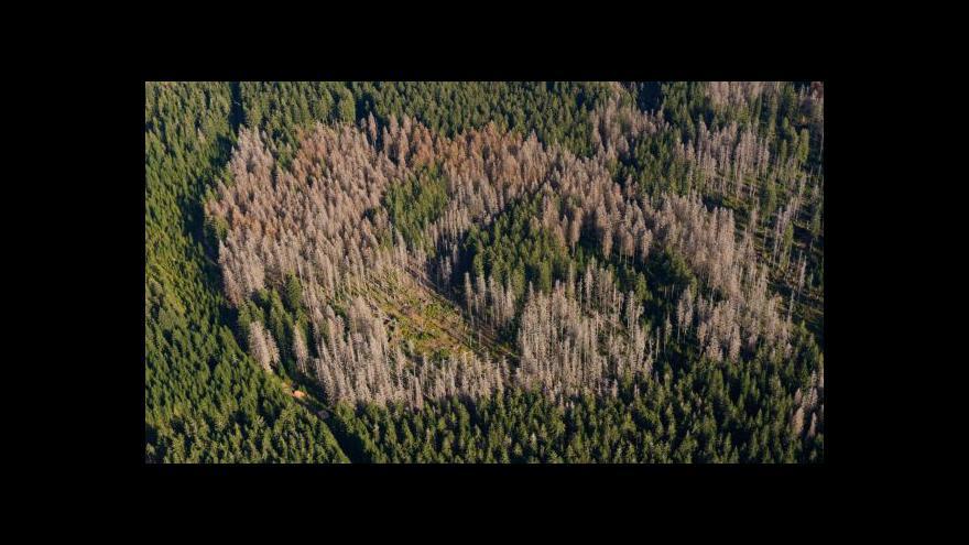 Video Šumava shora: Letecké snímky potvrdily ústup kůrovcové kalamity