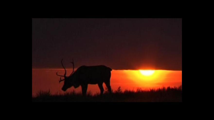 Video Sibiřské soby hlídá moderní technika