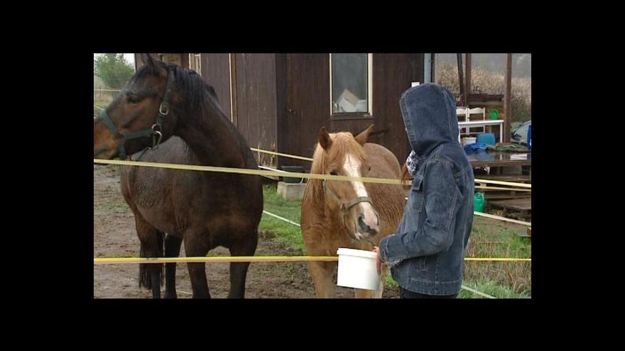 Video Kvůli týrání koní hrozí vejprnickému útulku zákaz činnosti