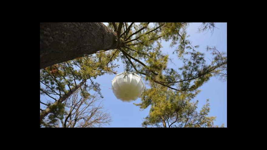 Video Vstup Barbory Žítkové z brněnského parku Lužánky