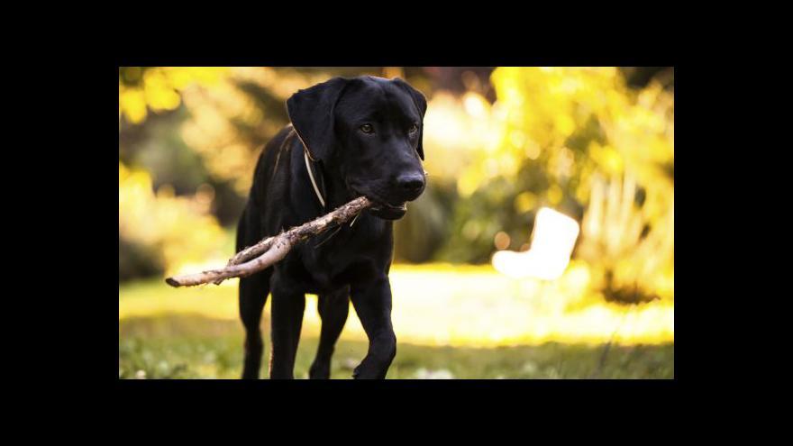 Video Investice do zvířat může být výhodný byznys