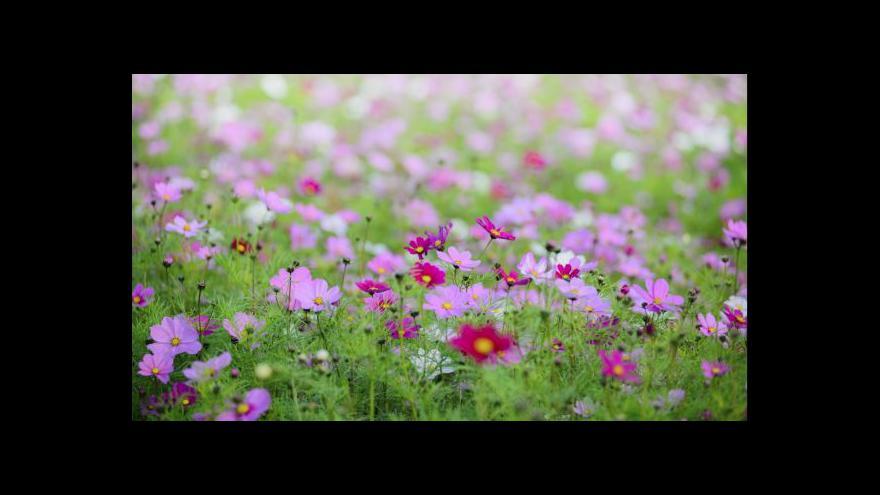 Video Události: Loni nakoupili Češi květiny za 8,5 miliardy