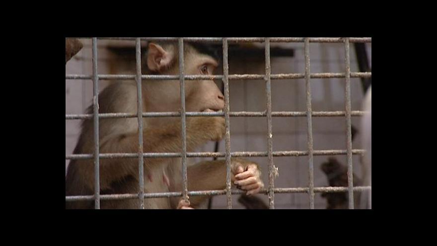 Video Záchrana zoo svépomocí - Charkov sobě