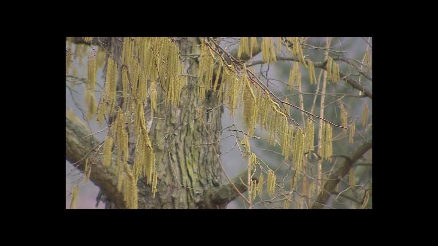 Video Pylová sezona v plném proudu