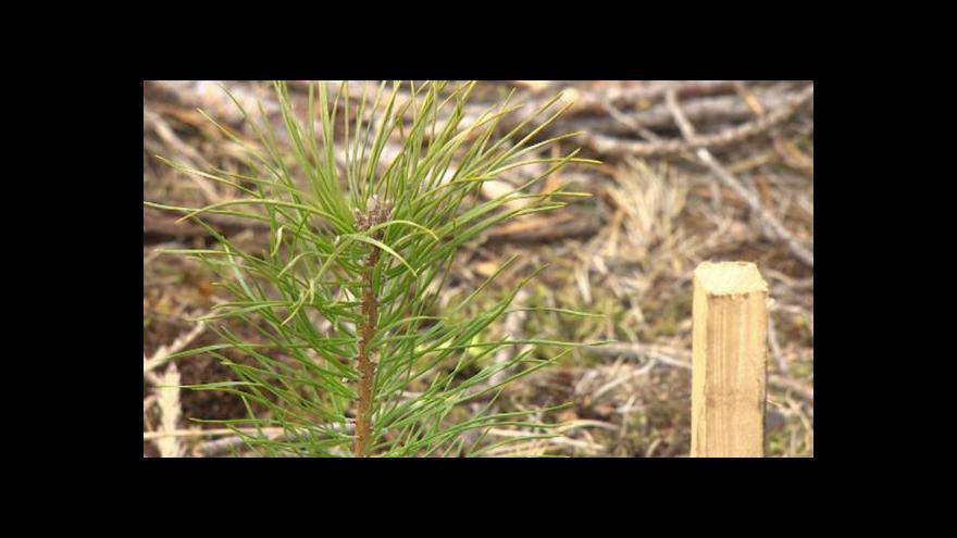 Video Lesy na Královéhradecku se rozrůstají o nové stromy