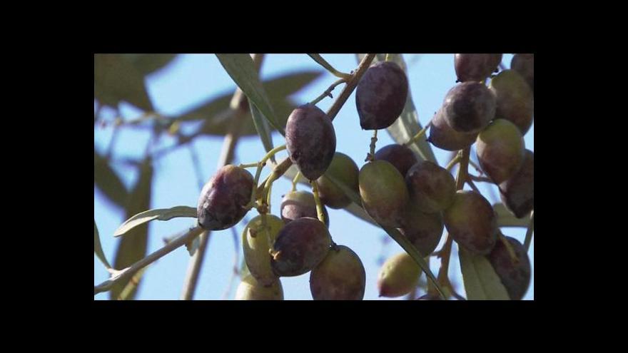 Video Řecký olivový olej v ohrožení