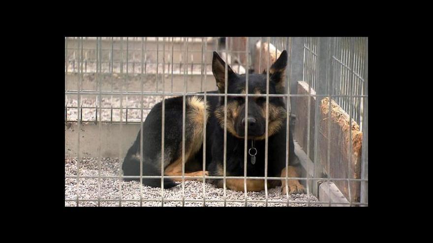 Video Lidé si stěžují na péči ve středočeských psích útulcích