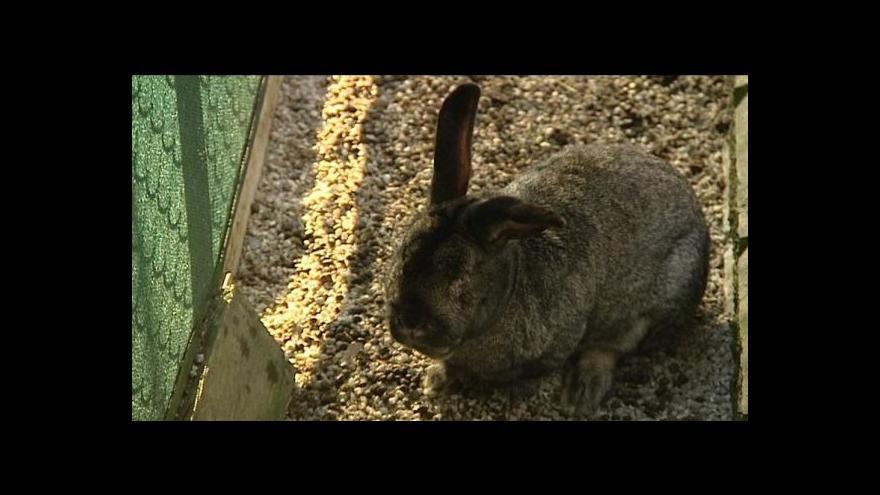 Video Barbora Vlčková o webu o odchycených zvířatech