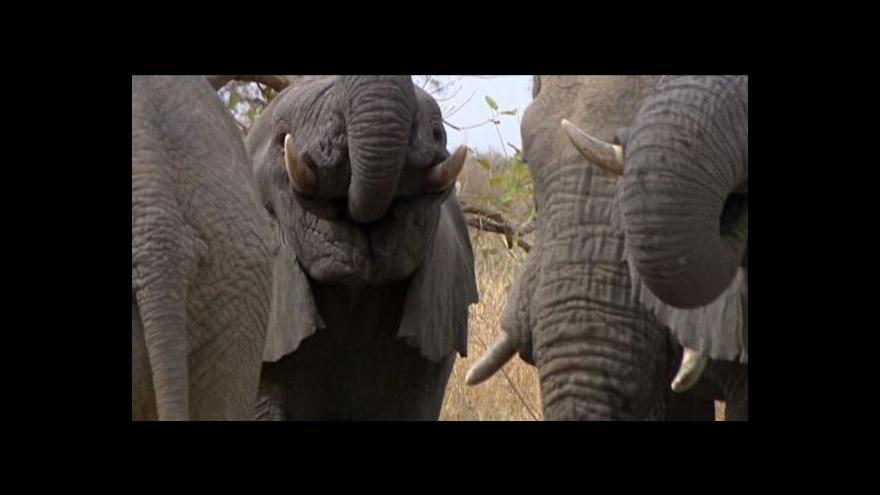 Video Konference o pytláctví se snaží zachránit, co se dá