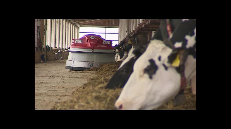 Video NO COMMENT: Provoz v automatizovaném kravíně