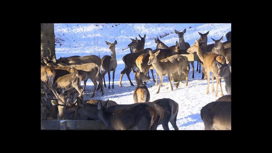 Video Pozorování jelenů ze srubu