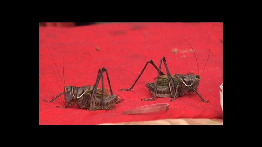 Video Veletrh cvrčků v Pekingu