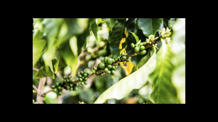 Video Není káva jako káva. O té kolumbijské to platí dvojnásob