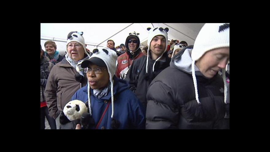 Video Malá panda se stala miláčkem Ameriky