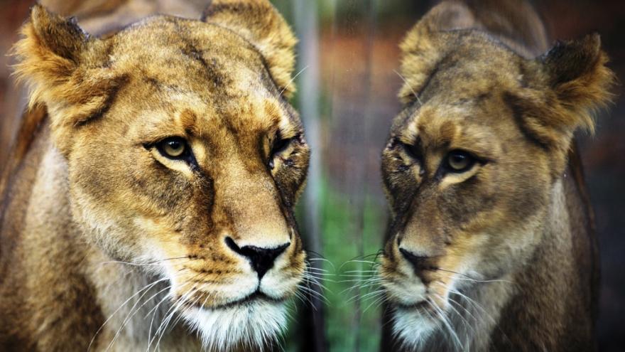 Video Liberecká zoo je o 15 let starší
