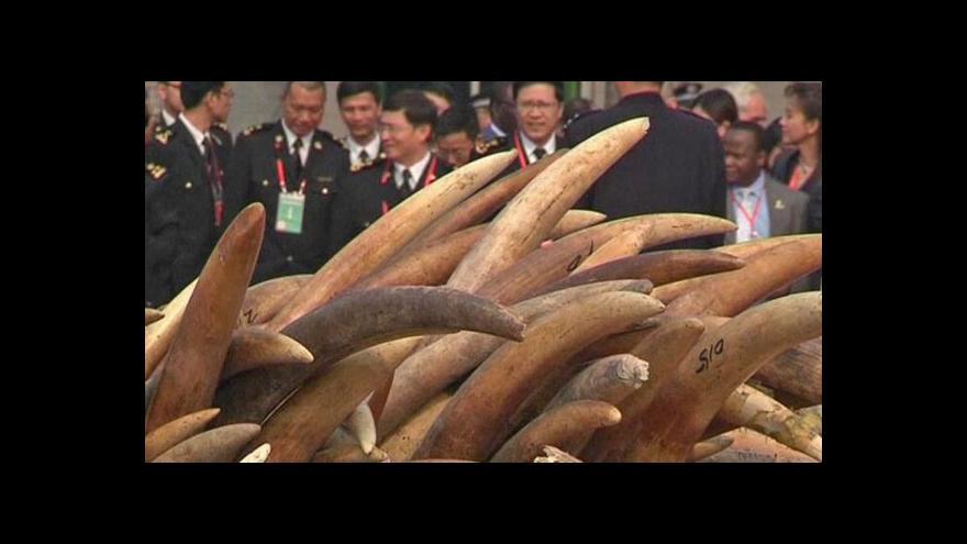 Video Horizont 24 k vybíjení slonů v Africe