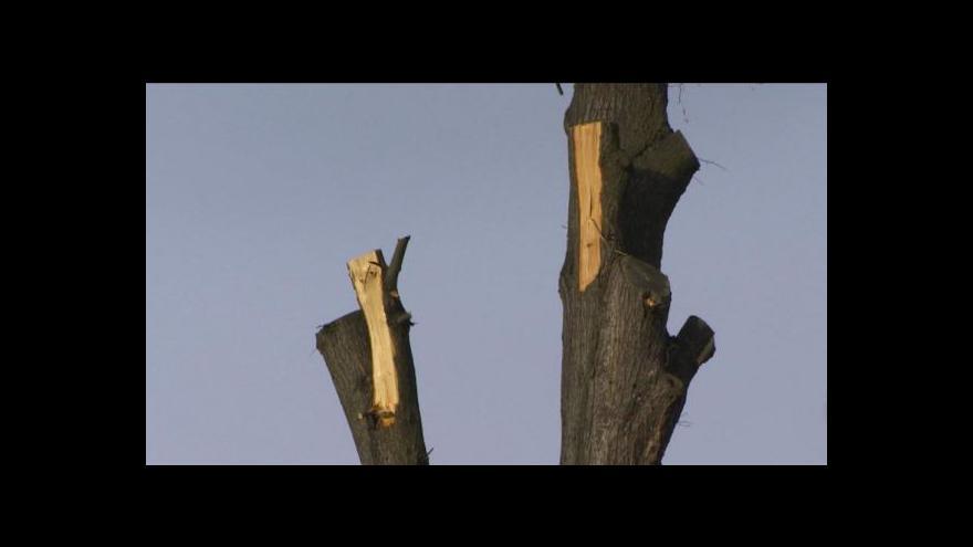 Video Jan Stuchlík o poničených lipách