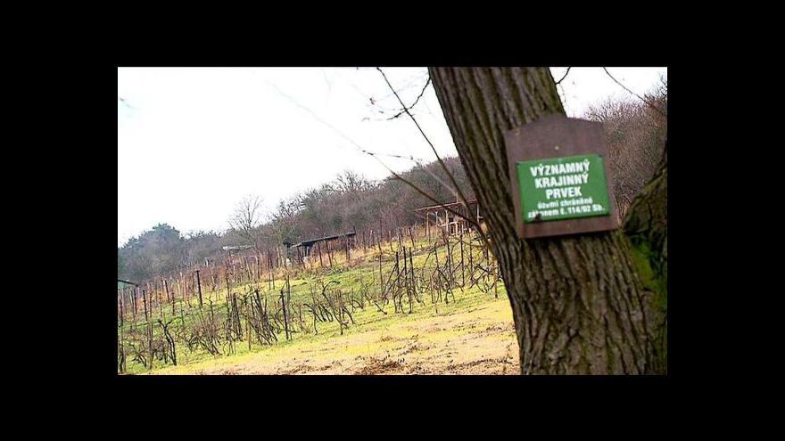 Video Svatováclavská vinice v Dřísech dál pustne