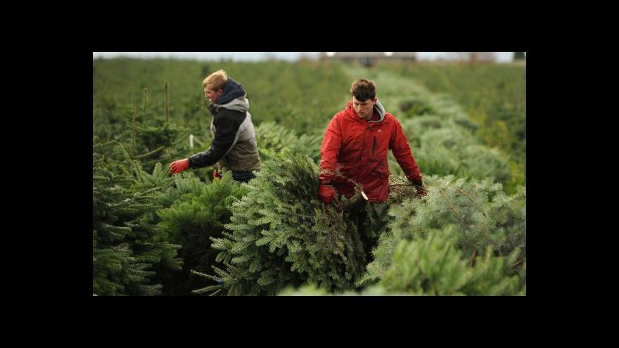 Video Přibývá krádeží vánočních stromků