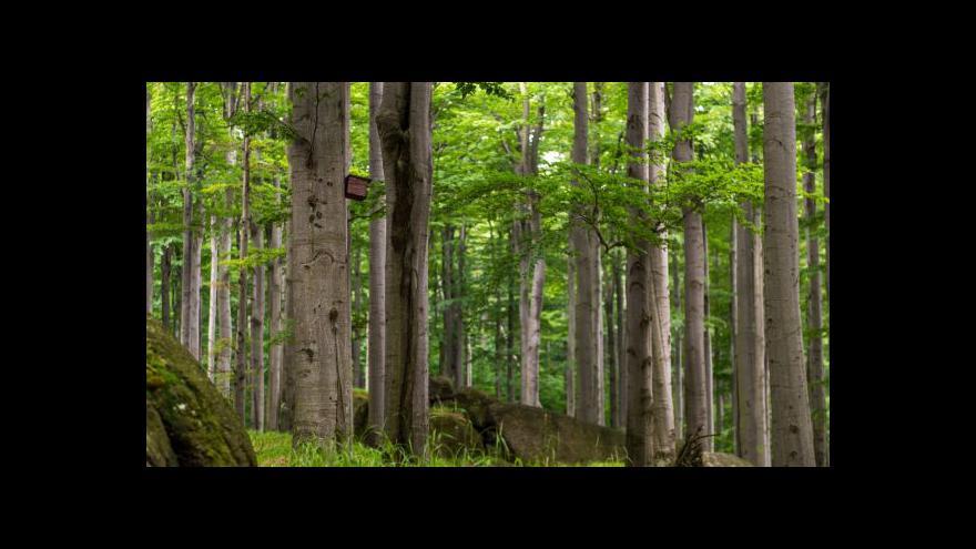 Video Vstup Ivy Zigmundové z lesa u Křtin