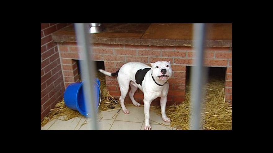 Video Horizont ČT24 ke slovenské novele zákona o chovu psů