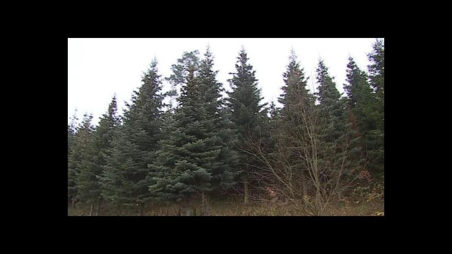 Video NO COMMENT: Kácení vánočního stromu pro Brno