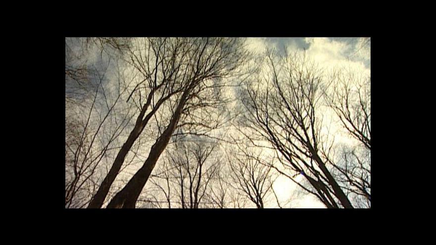 Video Erik Knajfl o kácení v Psí kuchyni