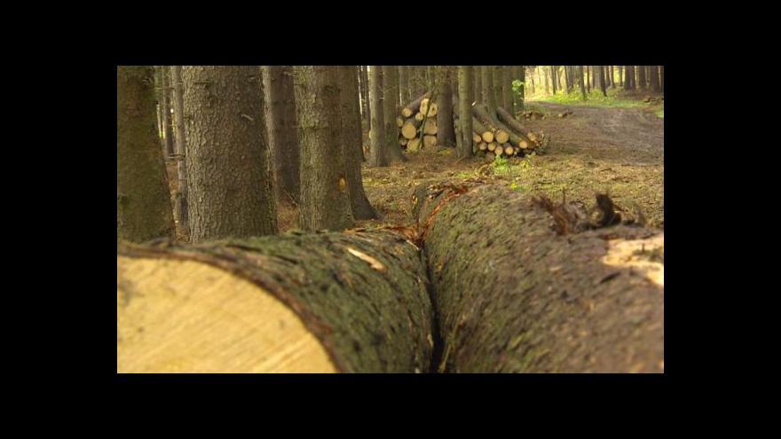 Video Krádeží dřeva na Vysočině přibývá