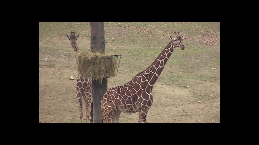 Video Ředitel zoo Martin Hovorka o investicích