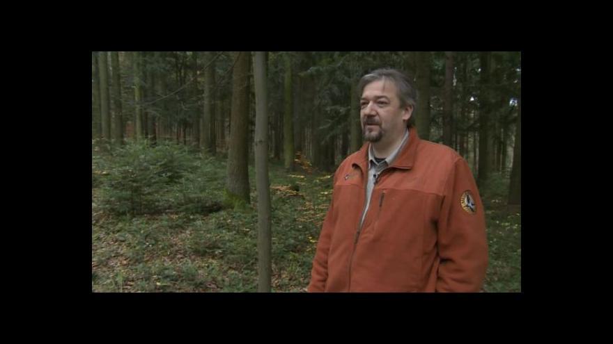 Video O vzácných stromech hovoří Petr Vančura z Národního parku Podyjí