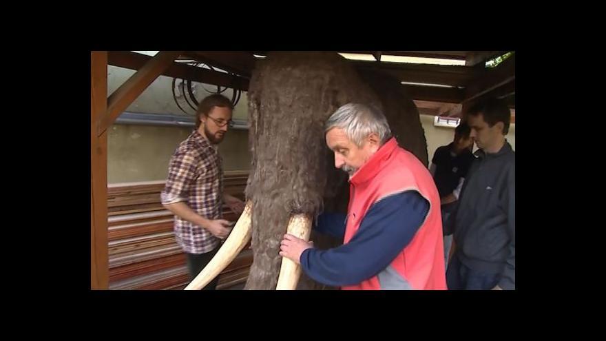 Video NO COMMENT: Stěhování mamuta v Uherském Hradišti